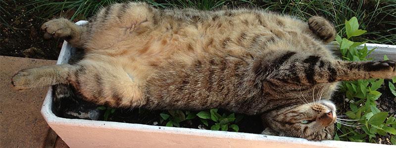 Cat-in-flowerpot